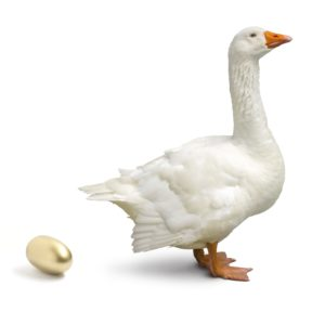 It's the goose that laid the golden egg concept isolated on white.